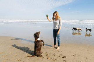 Gosi, un geolocalizador para mascotas