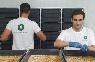 Las granjas de insectos, un nuevo modelo de negocio